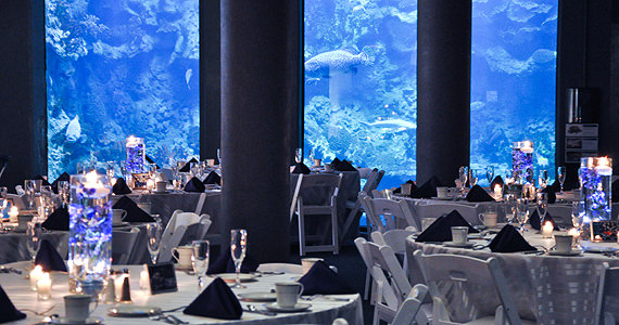 Wedding Receptions at the Pittsburgh Zoo and PPG Aquarium